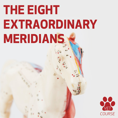 The 8 Extraordinary Meridians