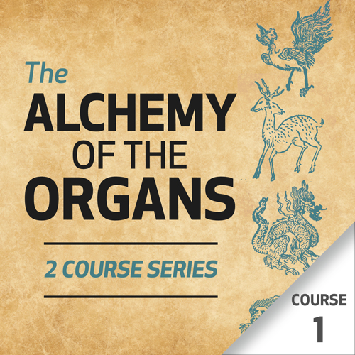 The Alchemy of the Organs - Course 1