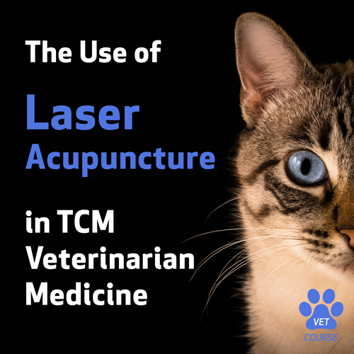Use of Laser Acupuncture in TCM Veterinary Medicine